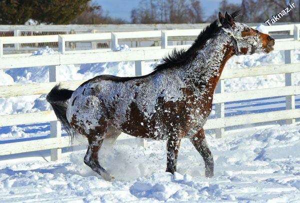 Photo: Horse in the snow